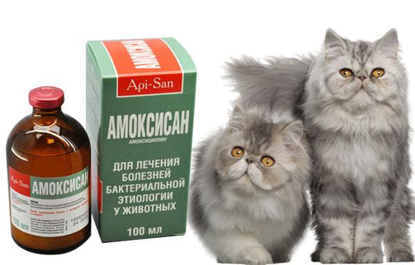 Препарат амоксисан для кошек