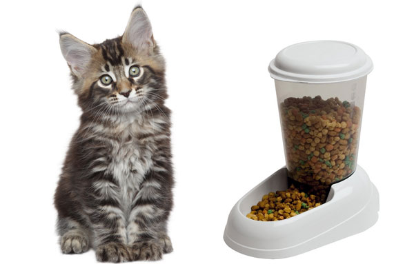 Котенок мейн-куна и корм