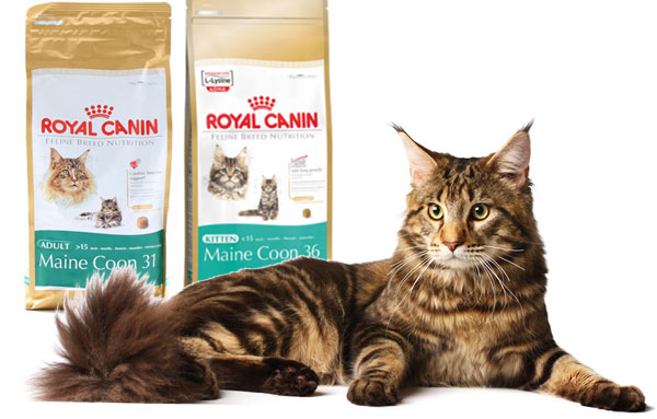 Royal Canin для мейн-кунов