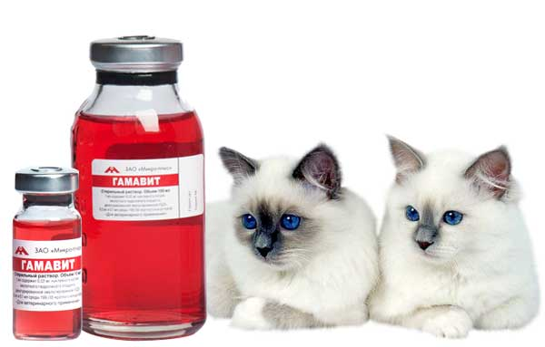 Препарат гематовит для кошек