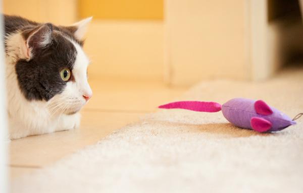 Кот охотится за игрушечной мышкой