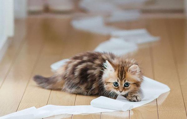 Котенок размотал туалетную бумагу