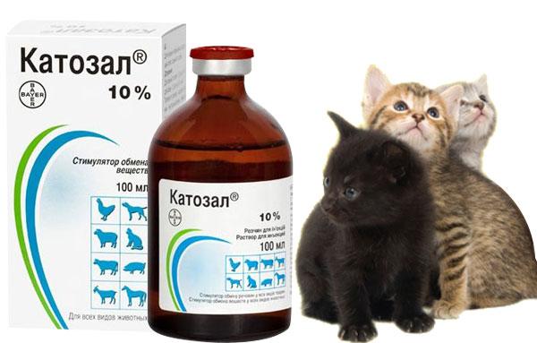 Препарат катозал для котят и кошек