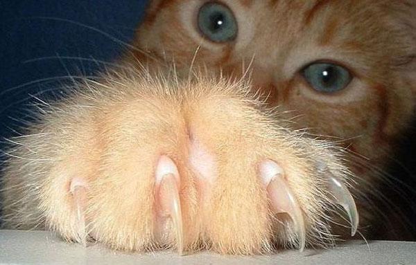 Когтерезка для кошек