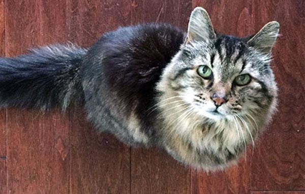 Кормление пожилой кошки и кота: готовые корма или натуральное питание