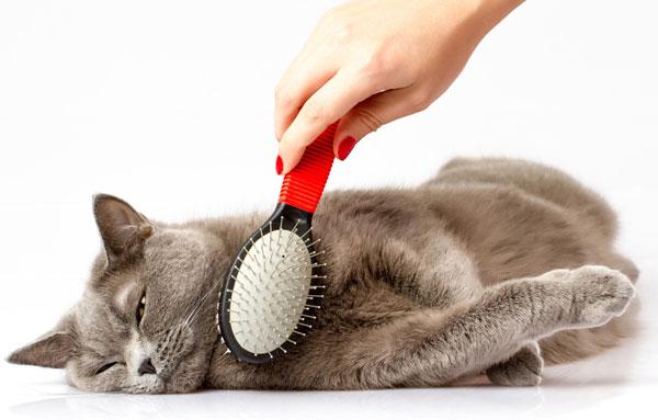 Расческа для кота