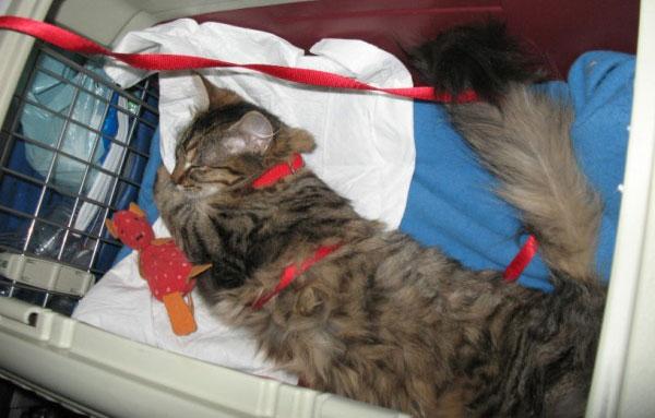 Что будет если дать коту снотворное