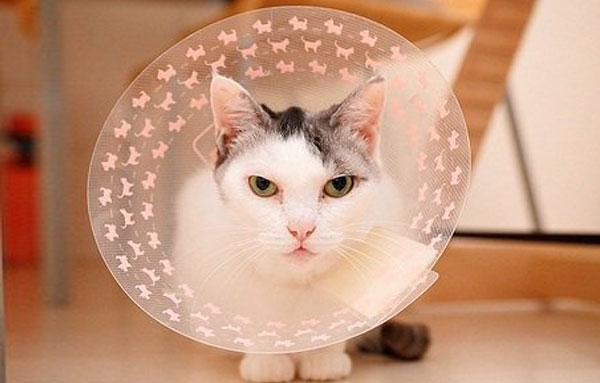 Использование ворота для кошки при применений препарата стоп-зуд спрей