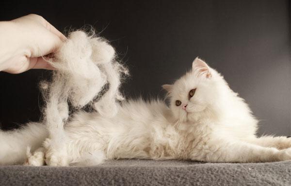 Линяющая кошека
