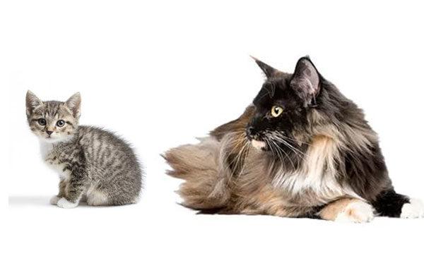 Кошки разного возраста