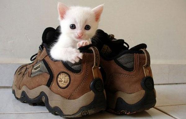 Запах кошачьей мочи в обуви