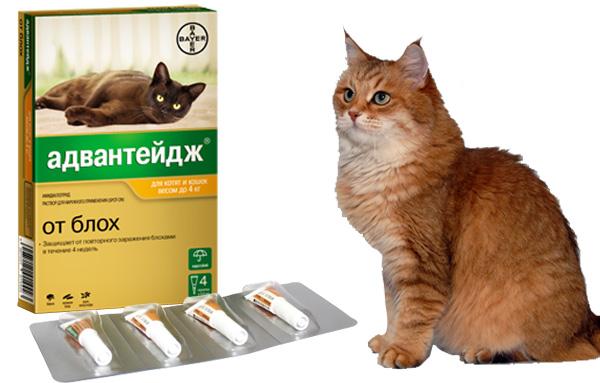 Препарат Адвантейдж от блох для кошек