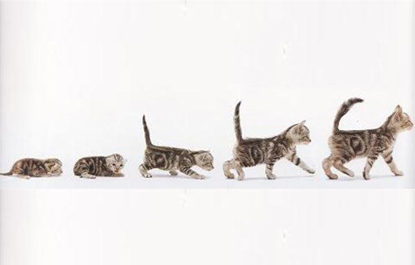 Размер котенка от возраста
