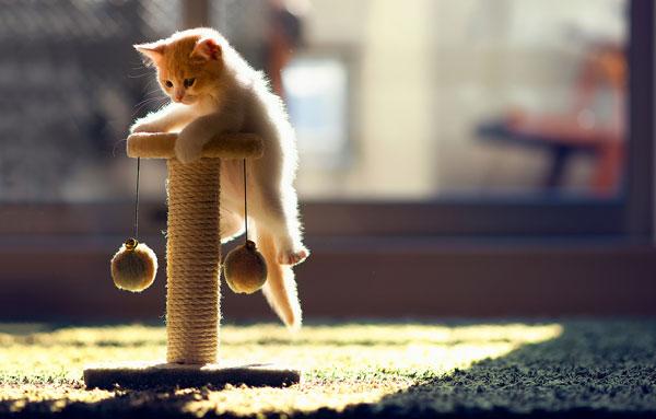котенок сидит на когтеточке