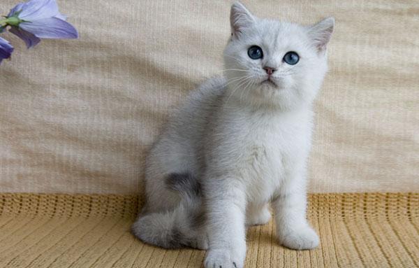 Котенку 2 месяца