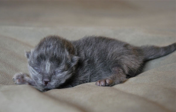 Новорожденный котенок
