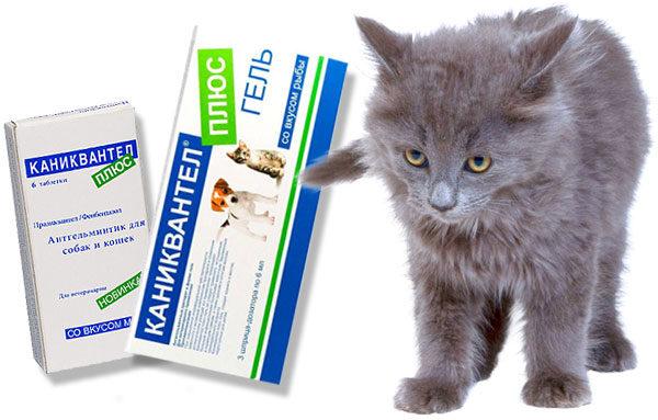 Препарат каниквантел плюс для кошек