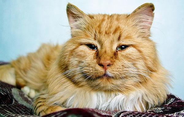 Пожилой кот
