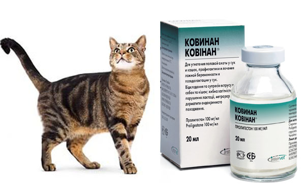 Ковинан для кошек