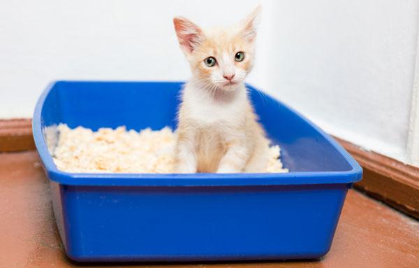 Как заставить котенка ходить в лоток