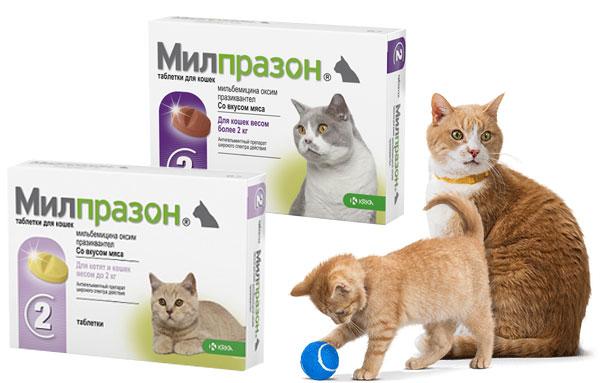 Препарат милпразон от глистов для кошек