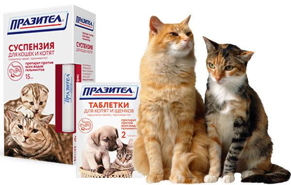 Празител для кошек и котят