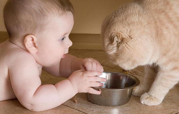 Порода кошек для детей