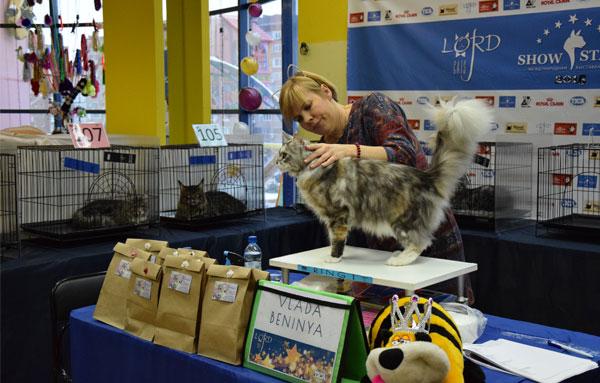 успокоительное можно давать кошке перед выставкой