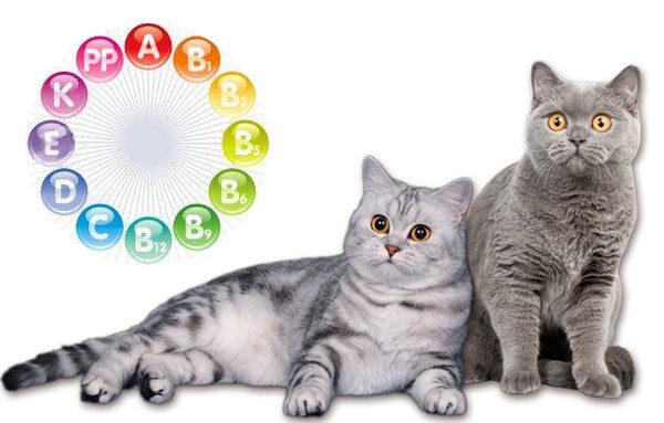 Витамины, необходимые кошке