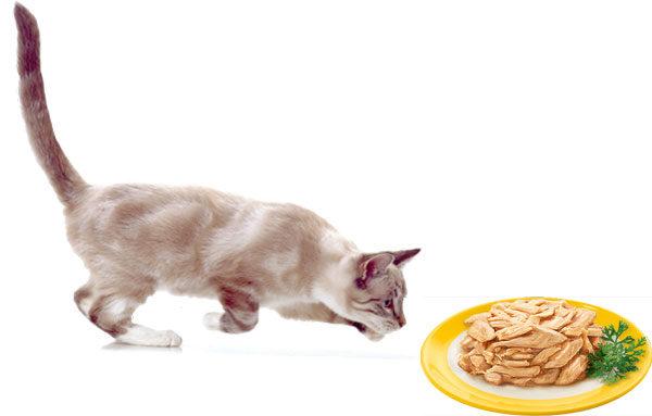 Влажный корм для кошек